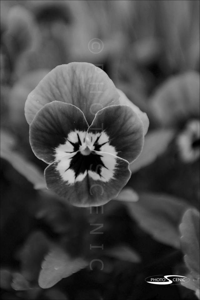 Flora_black_and_white_photos_013.jpg