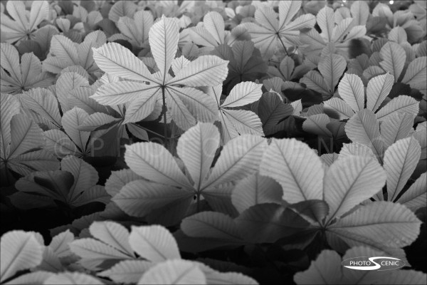 Flora_black_and_white_photos_004.jpg