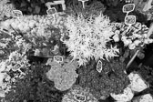 Market_Display_in-France_Black_and-White_Photos009.jpg