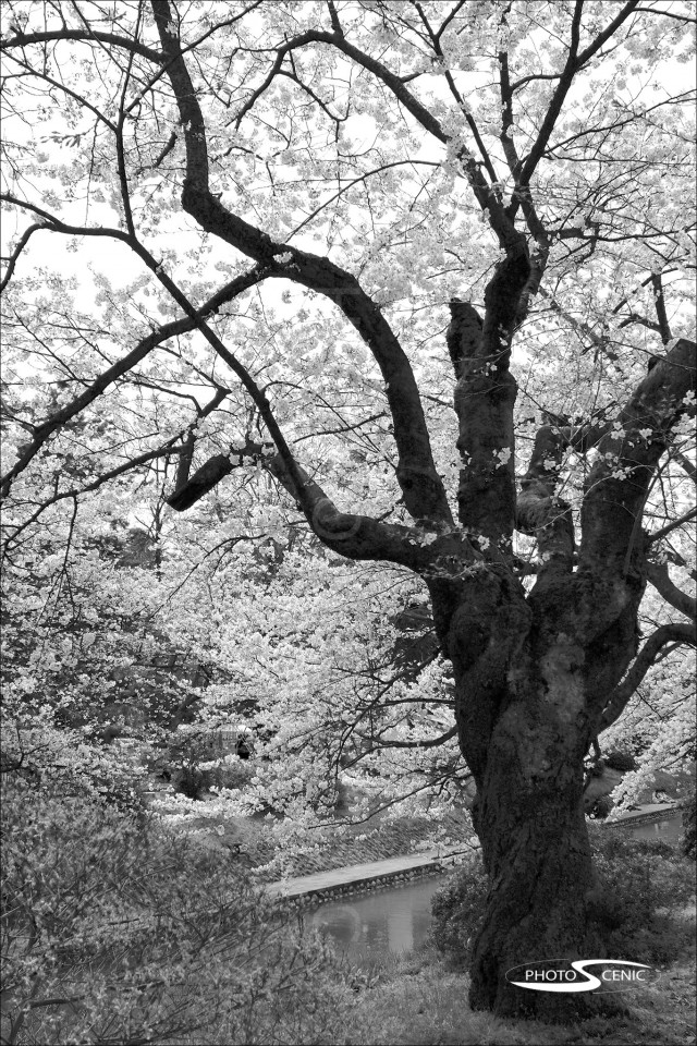 Japan_Black_and_White_Photos_030.jpg