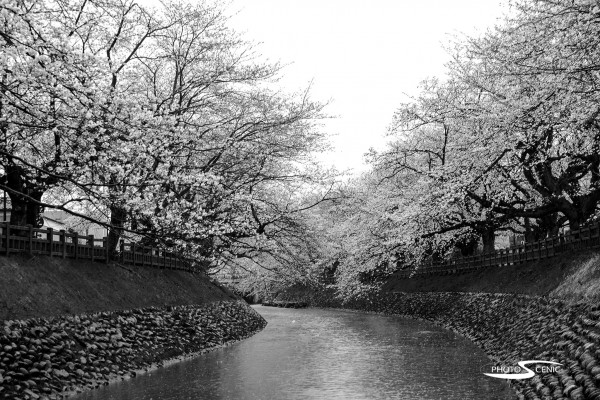 Japan_Black_and_White_Photos_005.jpg