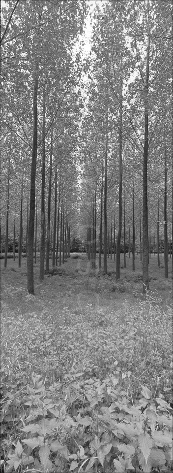Nature_Panoramic_BW_Photos003.jpg