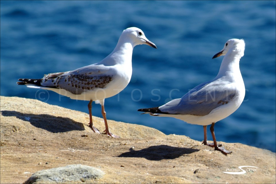 Seagulls Complicity