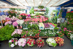 Market_Display_in-France_Colour_Photos_010.jpg