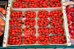 Market_Display_in-France_Colour_Photos_017.jpg