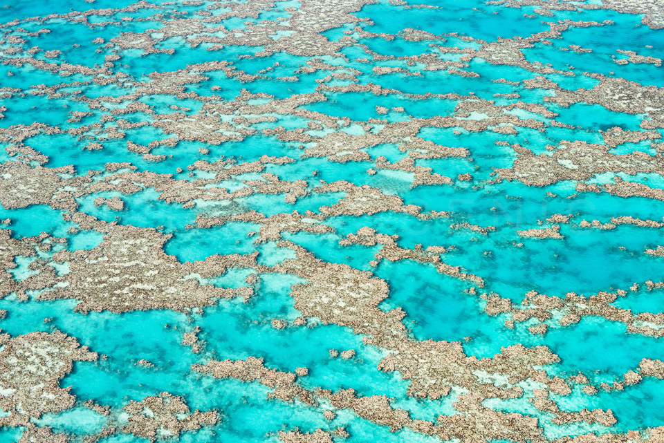 The_Great_Barrier_Reef_Scenic_Colour_Photos_028.jpg