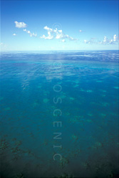 The_Great_Barrier_Reef_Scenic_Colour_Photos_013.jpg