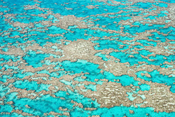 The_Great_Barrier_Reef_Scenic_Colour_Photos_029.jpg