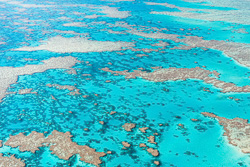The_Great_Barrier_Reef_Scenic_Colour_Photos_031.jpg
