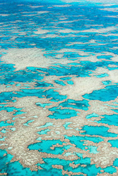 The_Great_Barrier_Reef_Scenic_Colour_Photos_048.jpg